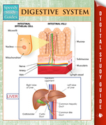 Digestive System (Speedy Study Guides)