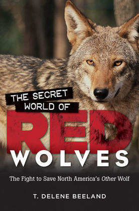 The Secret World of Red Wolves