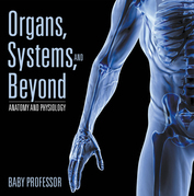 Organs, Systems, and Beyond | Anatomy and Physiology