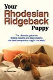 Your Rhodesian Ridgeback Puppy