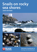 Snails on rocky sea shores