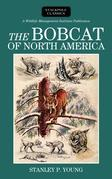 The Bobcat of North America