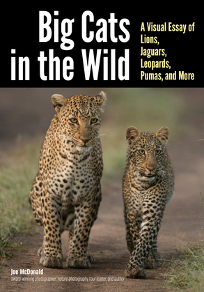 Big Cats in The Wild