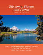 Blossoms, Blooms and Scenes