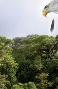 Cuauhtémoc: Descending Eagle