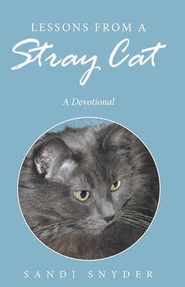 Lessons from a Stray Cat
