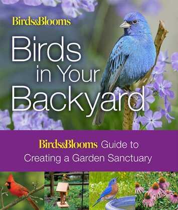 Birds & Blooms: Birds in Your Backyard