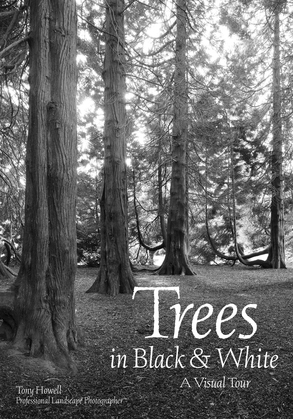 Trees in Black & White