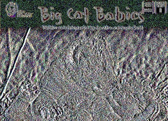 Big Cat Babies: Band 05/Green (Collins Big Cat)