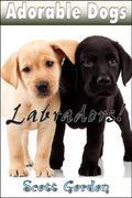 Adorable Dogs: Labradors