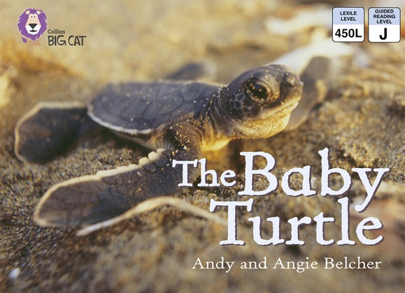 The Baby Turtle: Band 03/Yellow (Collins Big Cat)