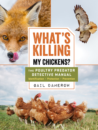 What's Killing My Chickens?