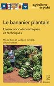 Le bananier plantain