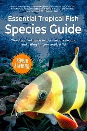 Essential Tropical Fish