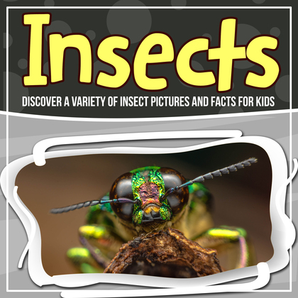 Insects: Discover A Variety Of Insect Pictures And Facts For Kids
