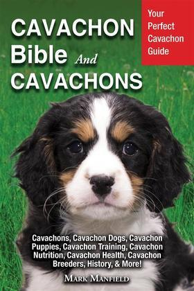 Cavachon Bible And Cavachons