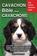 Cavachon Bible And Cavachons