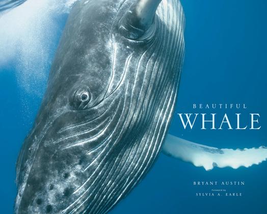 Beautiful Whale