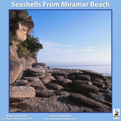 Seashells from Miramar Beach