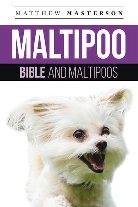 Maltipoo  Bible And Maltipoos