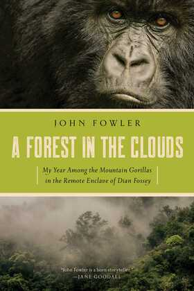A Forest in the Clouds