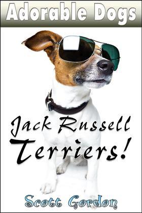 Adorable Dogs: Jack Russell Terriers