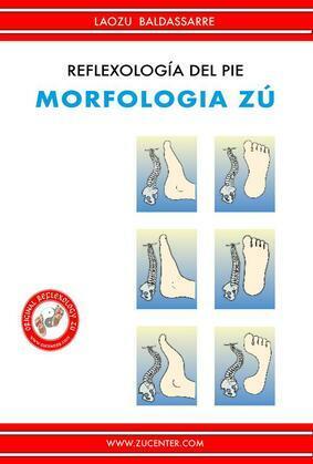 Reflexología del pie - Morfologia Zú
