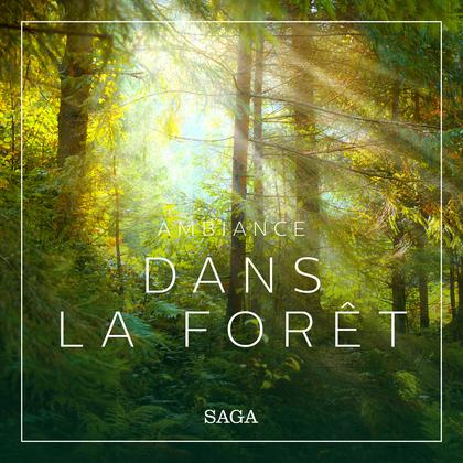 Ambiance - Dans la forêt