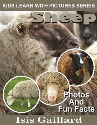 Sheep: Photos and Fun Facts for Kids