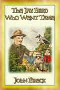 THE JAY BIRD WHO WENT TAME - Twilight Stories Book VIII