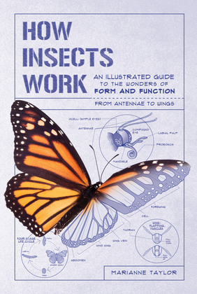 How Insects Work