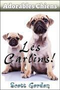 Adorables Chiens : Les Carlins
