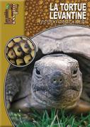 La tortue levantine