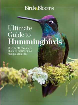 Birds & Blooms Ultimate Guide to Hummingbirds