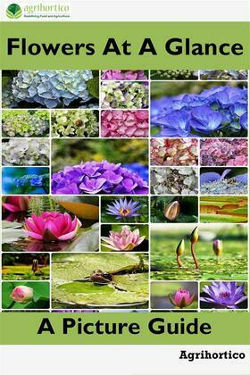 Flowers at a Glance