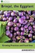 Brinjals, the Eggplant