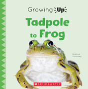 Tadpole to Frog (Growing Up)