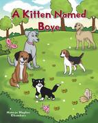 A Kitten Named Boye