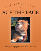 The Adventures of Ace The Face