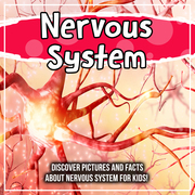 Nervous System: Discover Pictures and Facts About Nervous System For Kids!