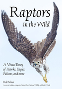 Raptors in the Wild