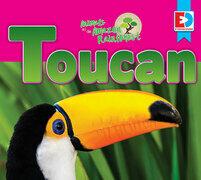 Animals of the Amazon Rainforest: Toucan
