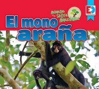 Animales de la Selva Amazónica — El mono araña