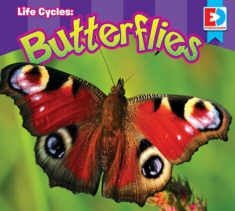Life Cycles: Butterflies