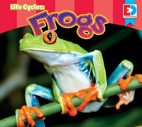 Life Cycles: Frogs