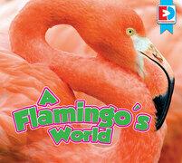 A Flamingo's World