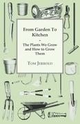 Our Wartime Kitchen Garden