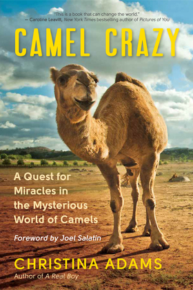 Camel Crazy