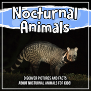 Nocturnal Animals: Discover Pictures and Facts About Nocturnal Animals For Kids!