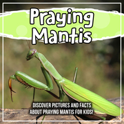 Praying Mantis: Discover Pictures and Facts About Praying Mantis For Kids!